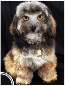 eulenlanghaarhund 225x300 - eulenlanghaarhund